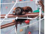 旭山動物園 おらんうーたん館