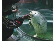 旭山動物園 あざらし館