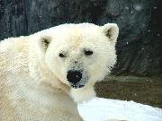 旭山動物園 ほっきょくぐま館